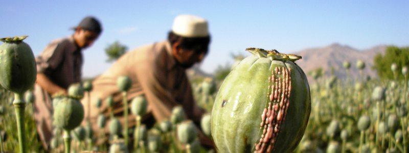 Afghan Farmers Solar Panels Opium