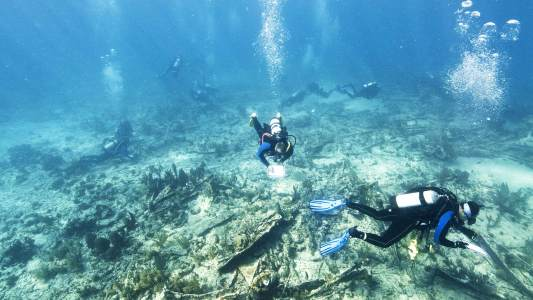diving with a purpose