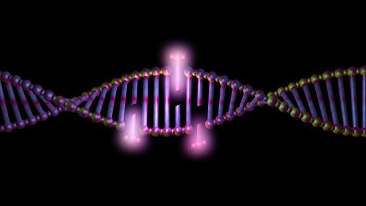duplication mutation