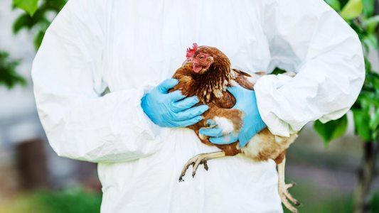 H5N8 bird flu