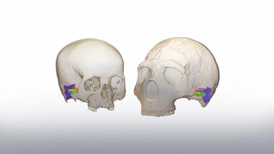 neanderthal communication