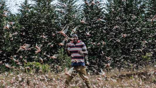 locust swarms east africa