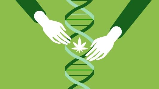 medicinal cannabis research