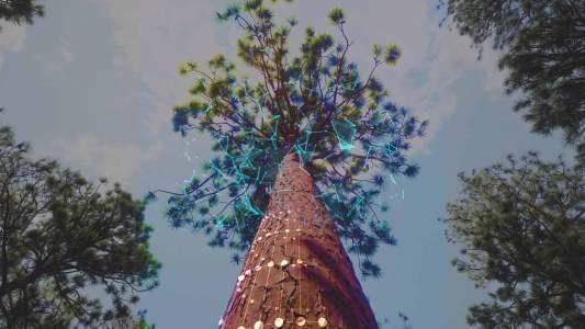 3d models of trees