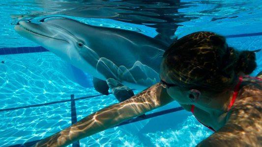 robot dolphin