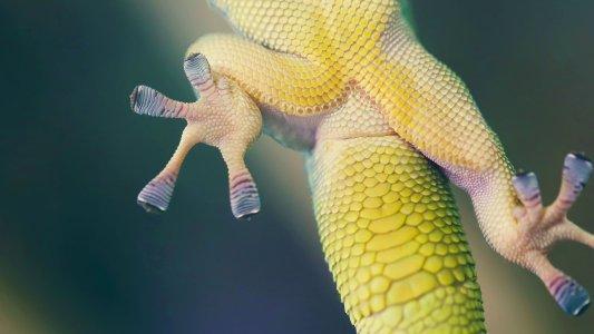 gecko gripper