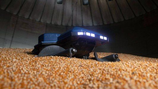 grain weevil robot