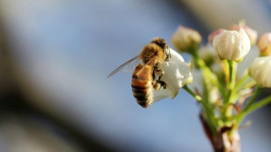 pesticides kill bees