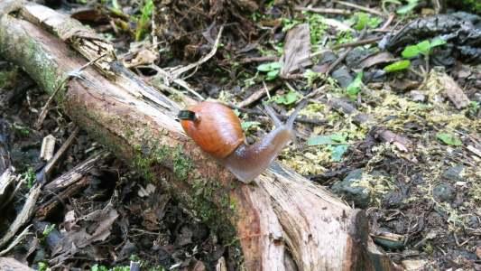 snails wear smallest computer