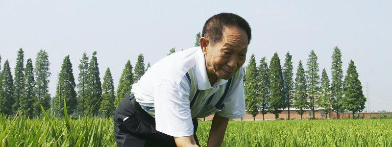 Yuan Longping Rice