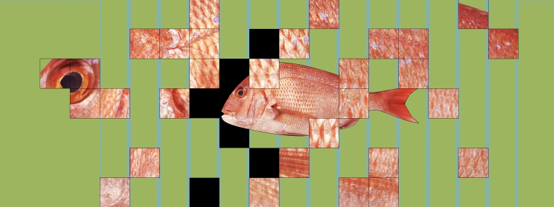 gene-edited fish